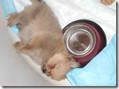 My precious, gluten-free puppy- Coco!