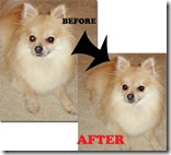 Removing Pet-Green-Eye in Pics with Digital Scrapbooks and More